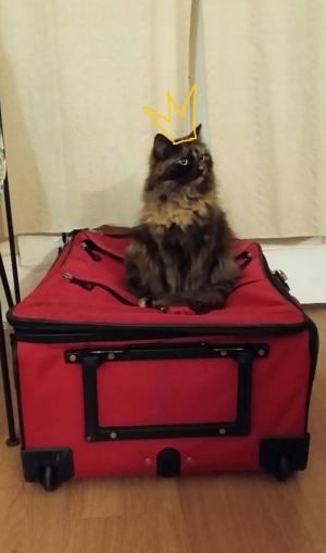 Fina on suitcase